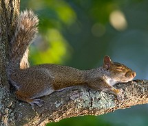sleep squirrel 2.jpg