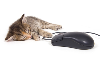 cat mouse 1.png