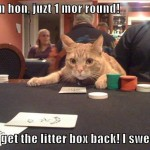 cat gamble 1.jpg