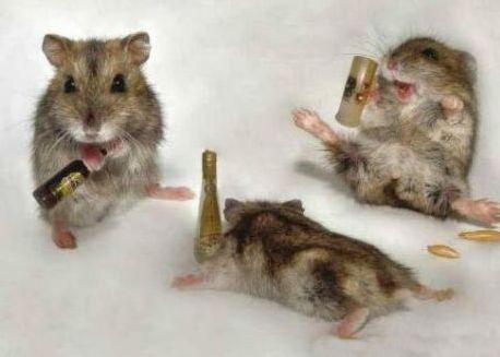 mouse party 1.jpg