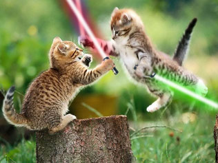 cat star wars.jpg