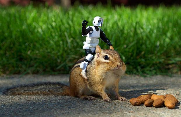 squirrel storm trooper.jpg