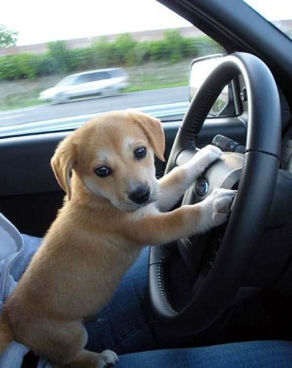 Driving-to-puppy-park-l.jpg