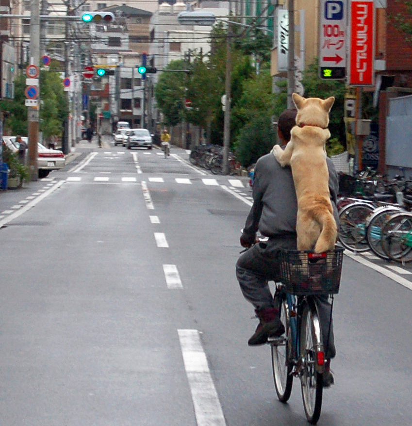 dog oin bike 1.jpg